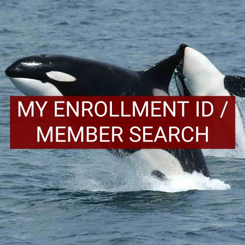 My Enrollment ID / Member Search